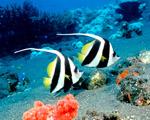 Obrázek - Zamilovaný pár pod mořem