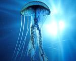 Obrázek - Krása podmořského života