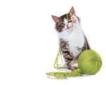 Obrázek - Kočka se hlásí o slovo