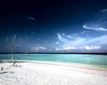 Obrázek - Pláž u mrtvého stromu