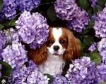 Obrázek - Pejsek mezi květinami