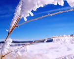 Obrázek - Lednové počasí