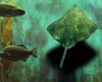 Obrázek - Podmořské UFO