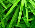 Obrázek - Ranní déšť na trávě