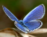 Obrázek - Modrý motýlek