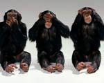 Obrázek - Tři šimpanzí bráchové