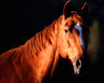Obrázek - Kůň ve slunečním světle