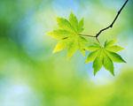 Obrázek - Jarní lístky na větvích
