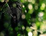 Obrázek - Porušená pavučina