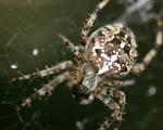 Obrázek - Pavouk v detailu