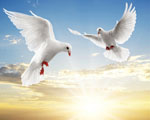 Obrázek - Zamilovaný pár holubů