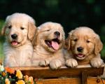 Obrázek - Tři malí kamarádi