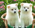 Obrázek - Milujeme zvířátka