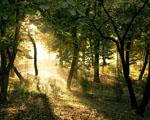 Obrázek - Kouzelný les