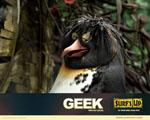 Obrázek - Geek místní povaleč a surfař