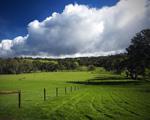 Obrázek - Zelená louka s modrou oblohou