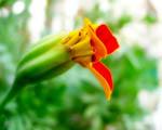 Obrázek - Květina v detailu