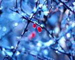 Obrázek - Zmrzlé plody