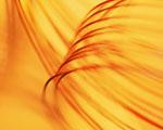 Obrázek - Žluté mámení