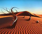Obrázek - Nový život v poušti