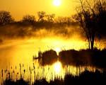 Obrázek - Zlaté probuzení v přírodě