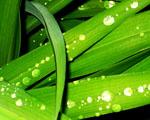 Obrázek - Diamanty na zelených listech