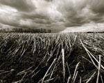 Obrázek - Černobílé posečené pole