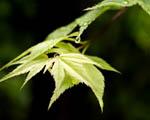 Obrázek - Stromové listí