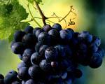 Obrázek - Červené hroznové víno