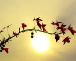 Obrázek - Větvička stromu před západem slunce
