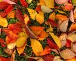 Barevná paleta podzimních listů