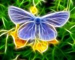 Obrázek - Motýl na květině ve 3D modelu