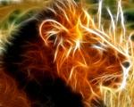 Obrázek - Lev král zvířat v detailu