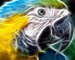 Obrázek - Hlava papouška za použití efektu