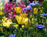 Obrázek - Zahrada plná krásných barev