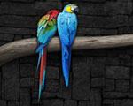 Obrázek - Dva papoušci