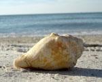 Obrázek - Osamocená na pláži