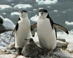 Obrázek - Tučnáci a Antarktida