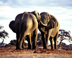 Obrázek - Sloni jako monumenty Afriky