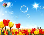 Obrázek - Pohádkový svět tulipánů