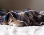 Unavené koťátko
