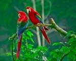 Kr�lovstv� papou�k�
