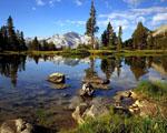 Obrázek - Alpské mokřiny