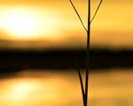 Obrázek - Holý kmen a západ slunce