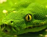 Obrázek - Zelená anakonda v detailu