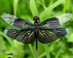 Obrázek - Krásná vážka v detailu