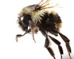 Obrázek - Start včely v detailu
