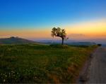 Obrázek - Poslední strom a západ slunce