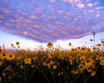 Obrázek - Nebe a Země