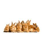 Obrázek - Velikonoční zajíčci
